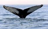 A baleia engole Jonas